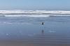 Kalaloch Beach 17