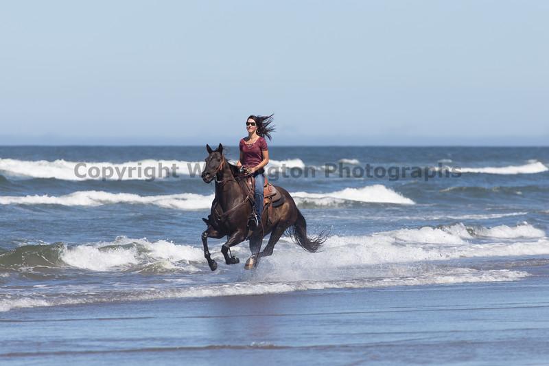 Long Beach Horseback Riding 31