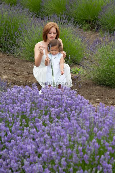 Lavender Farm 138