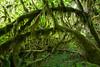 Hoh Rain Forest 124