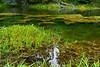 Hoh Rain Forest 43