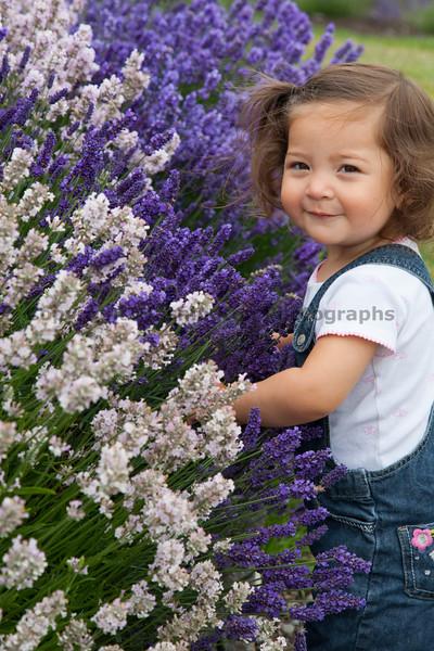 Lavender Farm 100