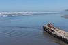 Kalaloch Beach 14