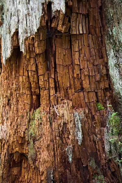 Hoh Rain Forest 119