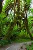 Hoh Rain Forest 33