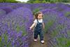 Lavender Farm 109
