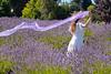 Lavender Farm 349