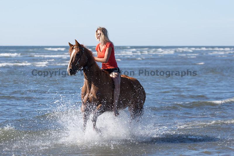 Long Beach Horseback Riding 23
