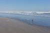 Kalaloch Beach 15