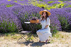 Lavender Farm 312