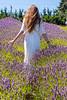 Lavender Farm 277