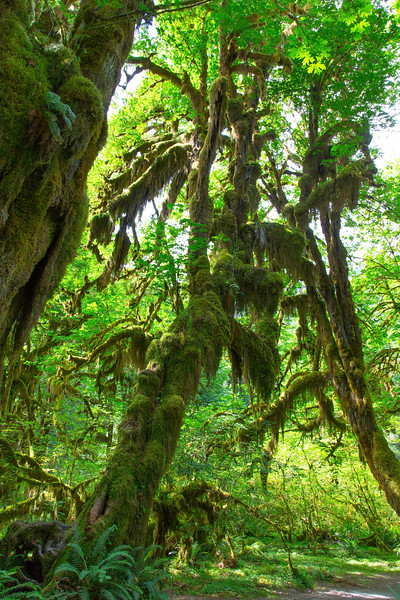 Hoh Rain Forest 14