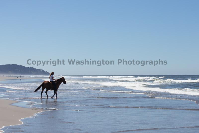 Long Beach Horseback Riding 49