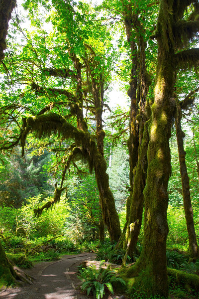 Hoh Rain Forest 19