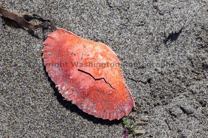 Beachcombing 19