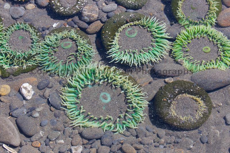 Ocean Beachcombing 58
