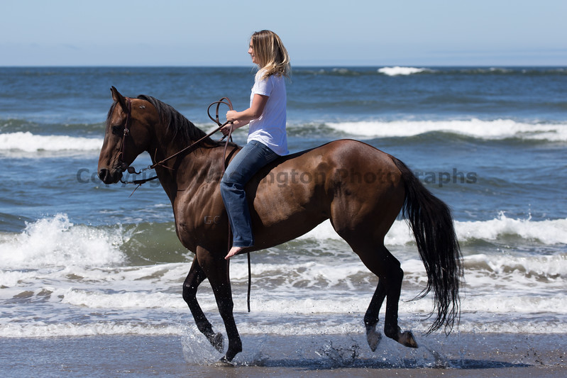 Long Beach Horseback Riding 43