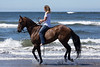 Long Beach Horseback Riding 43