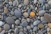 Ocean Beachcombing 45