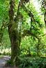 Hoh Rain Forest 21