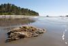 Ruby Beach 135