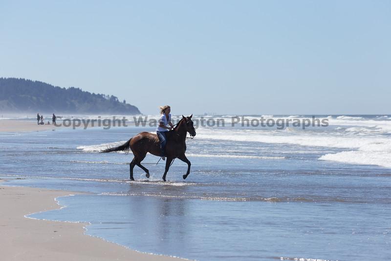 Long Beach Horseback Riding 52