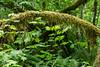 Hoh Rain Forest 158