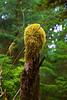 Hoh Rain Forest 22