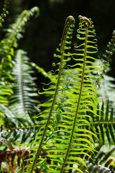 Hoh Rain Forest 117