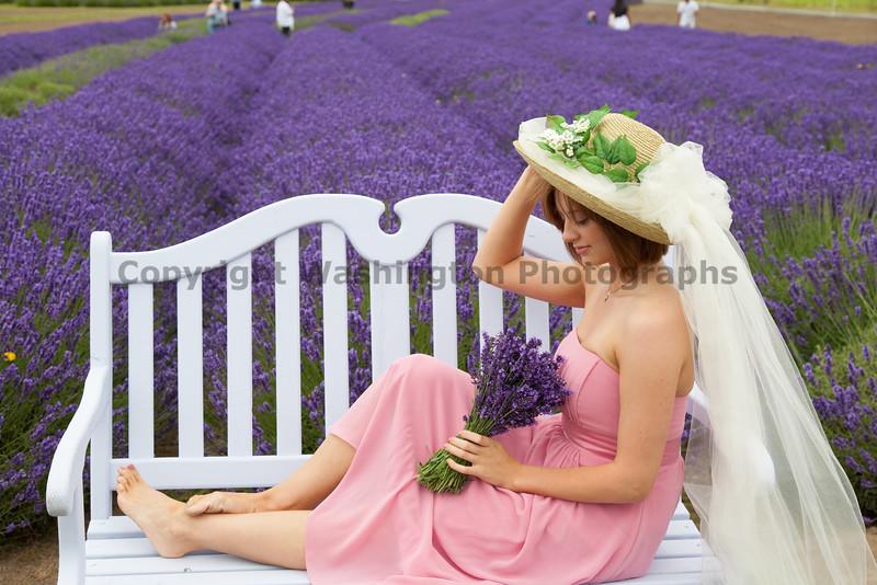 Lavender Farm 170