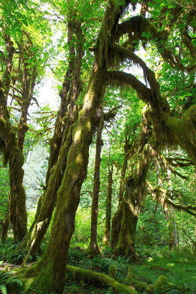 Hoh Rain Forest 20