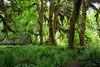 Hoh Rain Forest 127
