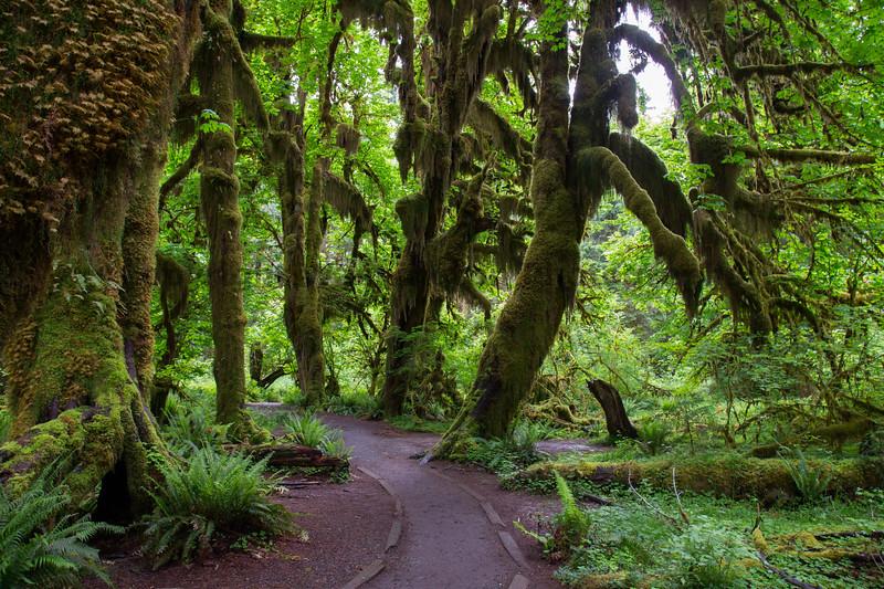 Hoh Rain Forest 140