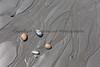 Ocean Beachcombing 47