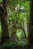 Hoh Rain Forest 132