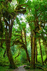 Hoh Rain Forest 36