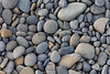 Ocean Beachcombing 43