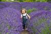 Lavender Farm 108