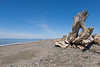 Dungeness Spit 67