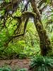 Moss-laden trees