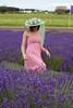 Lavender Farm 166