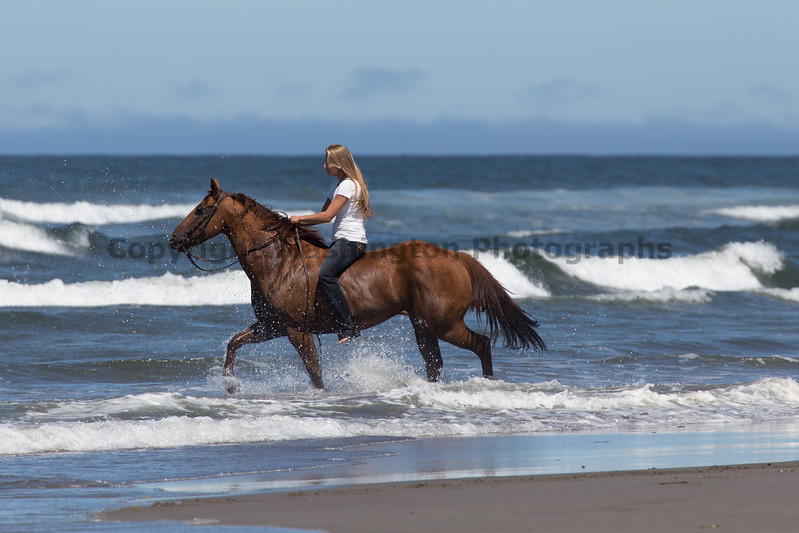 Long Beach Horseback Riding 41