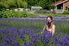 Lavender 05