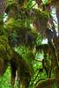 Hoh Rain Forest 34