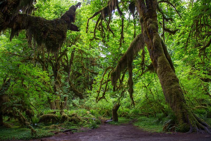 Hoh Rain Forest 137