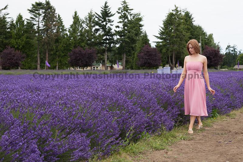 Lavender Farm 143
