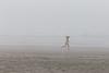 Kalaloch Fog 15