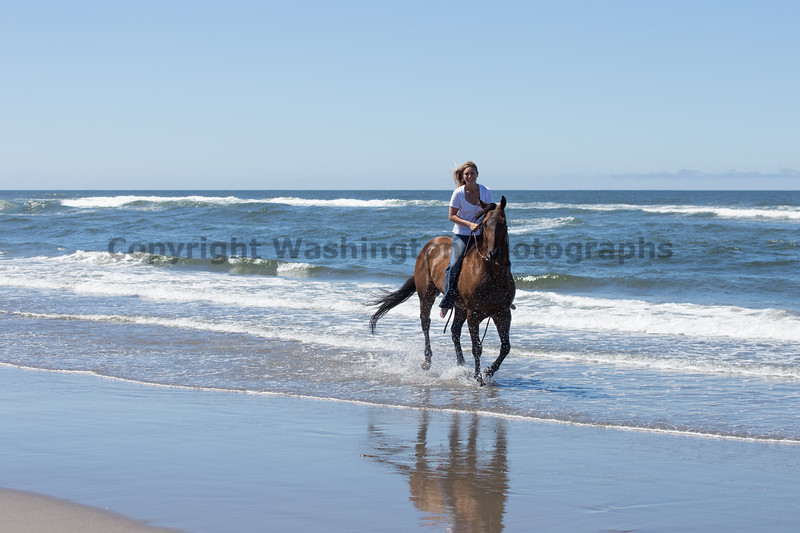 Long Beach Horseback Riding 53