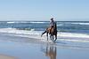 Long Beach Horseback Riding 53