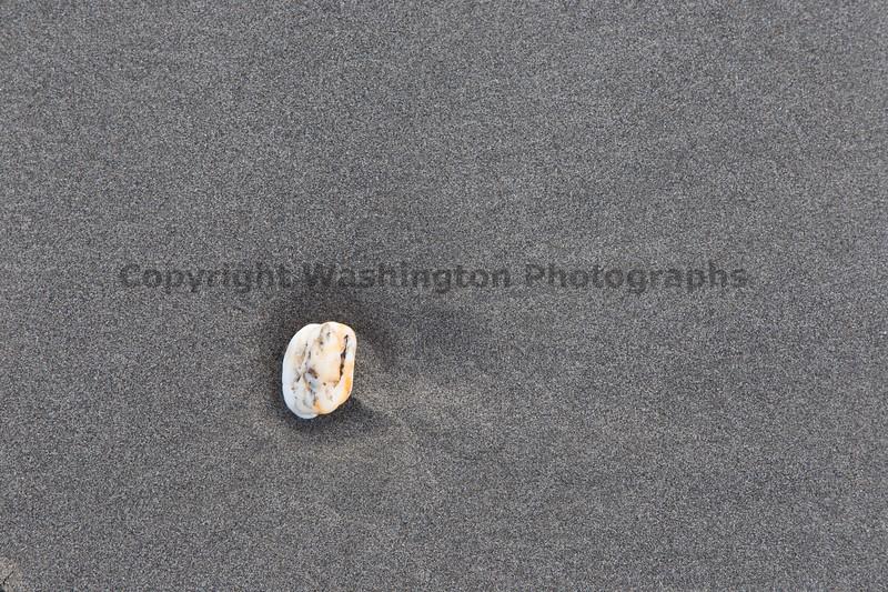 Ocean Beachcombing 37